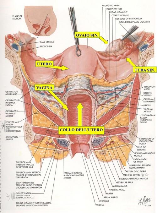 okanatomia
